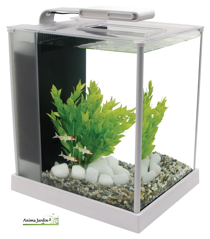 Petit aquarium for Aquarium petit prix