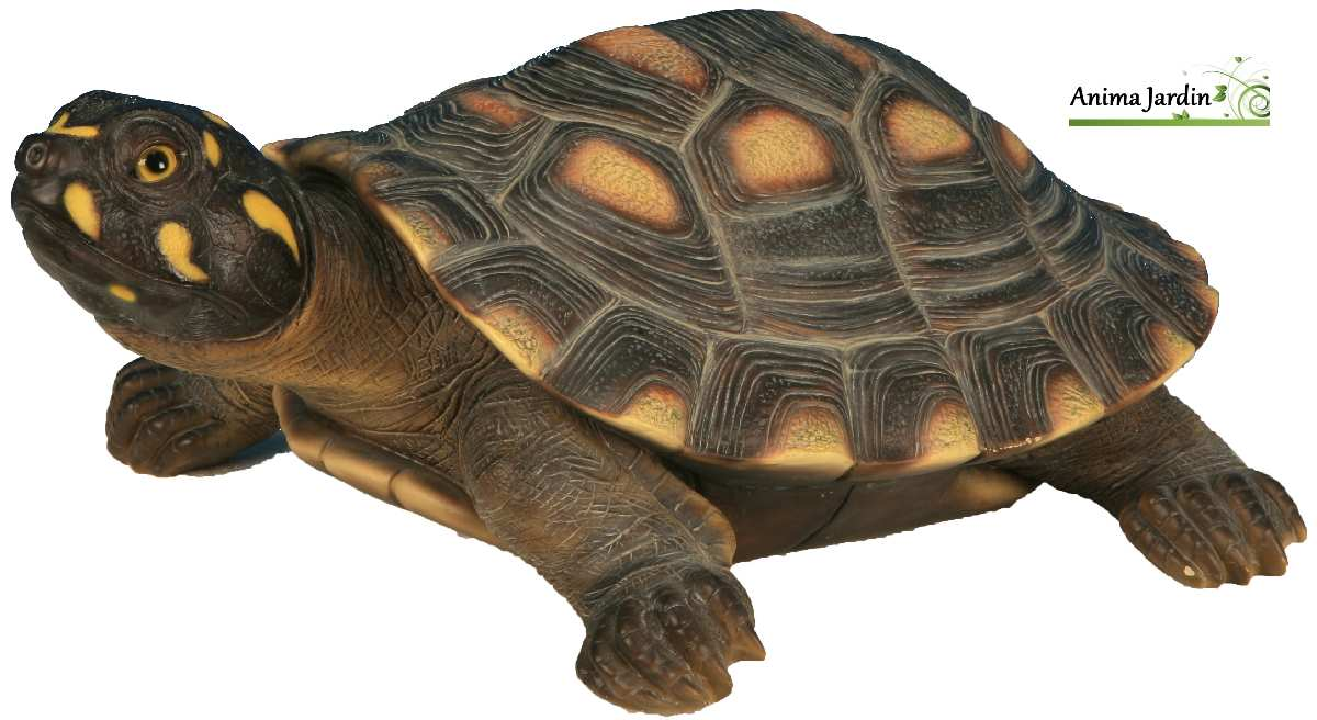 Tortue De Jardin Decoration