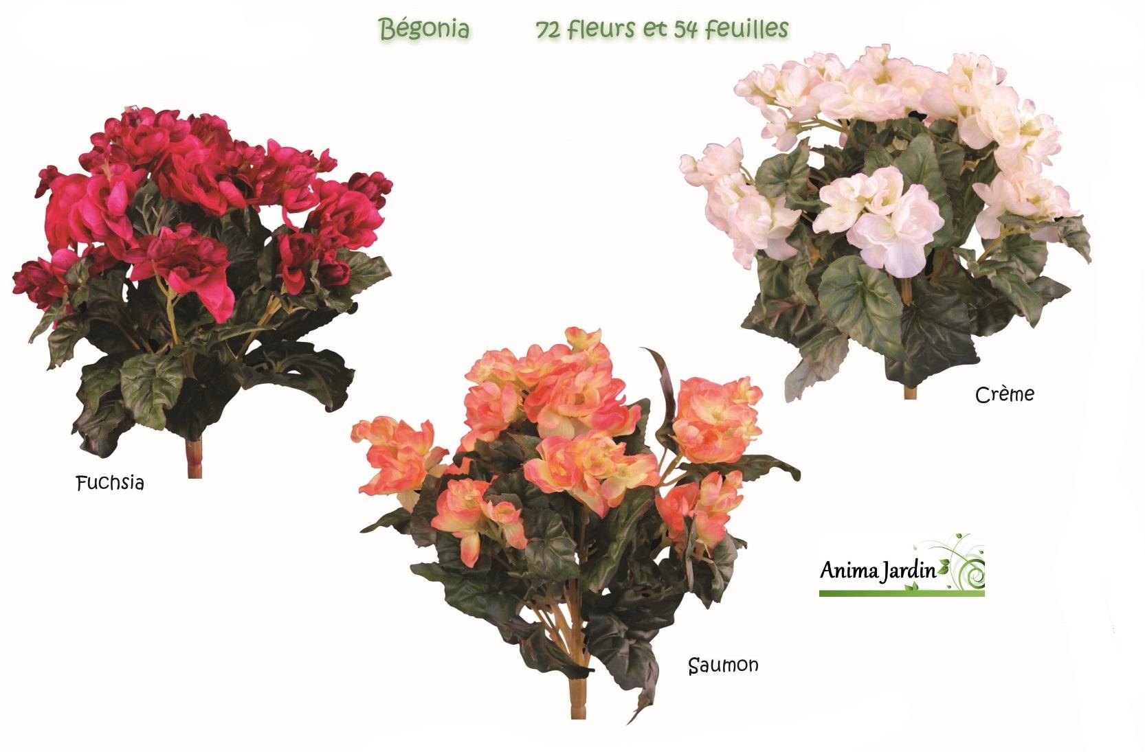 bégonias-3-couleurs-anima-jardin.fr