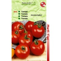 Graines de tomate MONEYMAKER, horti-tops, beaux fruits ronds, achat