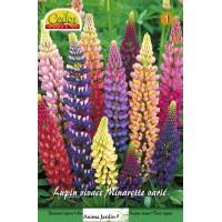 Mélange Lupins Minarette à semer, vivaces, multi-couleurs, achat/vente, cedor
