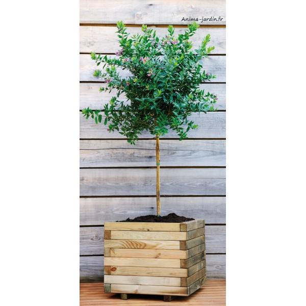 Bac jardini re bois pour plantes stockholm autoclave for Achat plante jardin