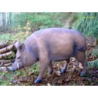 Sanglier en résine, cochon sauvage, animal de la forêt, décoration Jardin, achat
