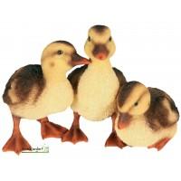 Canetons lot de 3, en résine, animal de la ferme, Riviera, petit canard