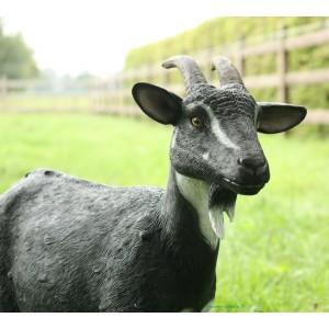 Chèvre 2 couleurs en fibre de verre, 80 cm, animal de la ferme, achat/vente