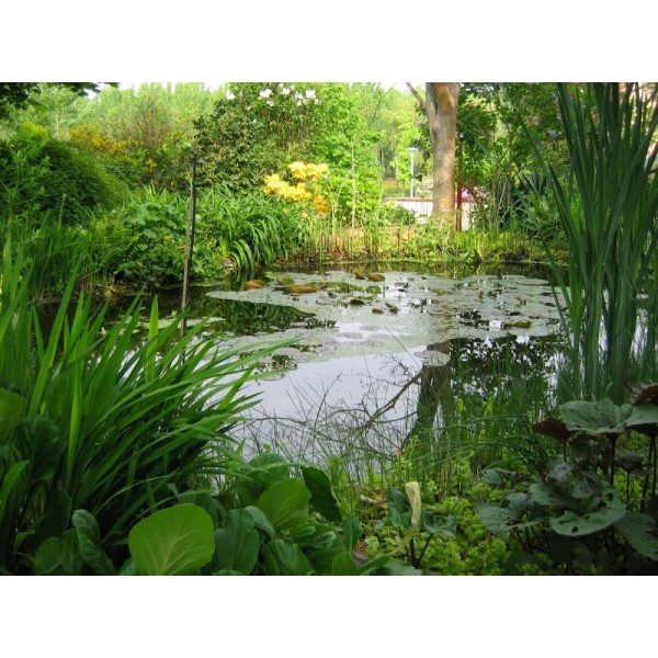 B che pour bassin en epdm aqua flexi liner ubbink for Bache pour bassin botanic