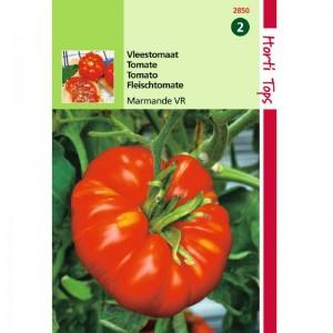 Graines de tomate MARMANDE, tomate précoce et savoureuse, achat, vente, pas cher