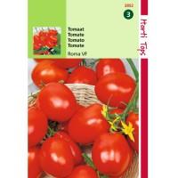 Graines de tomate, ROMA, potagères, forme allongée, achat, vente, pas cher
