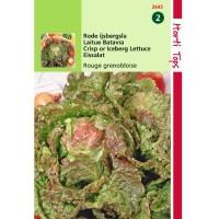 Graines de Salade laitue Batavia Rouge Grenobloise, résistante au froid, achat, vente, pas cher