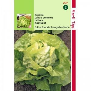 Graines de salade laitue pommée grosse blonde paresseuse, achat, vente, pas cher