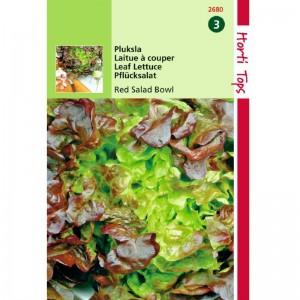 Graines de Salade à couper, laitue Red Bowl, très résistante à la montée, achat, vente, pas cher