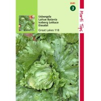 Graines de Salade Batavia Reine des Glaces, croquante, achat, vente, pas cher