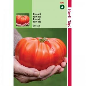 Graines de tomate Brutus, gros fruit rond, achat, vente, pas cher