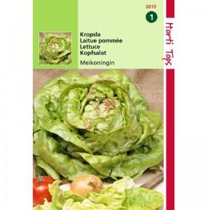 Graines de salade laitue Reine de Mai, graines potagères, achat, vente, pas cher
