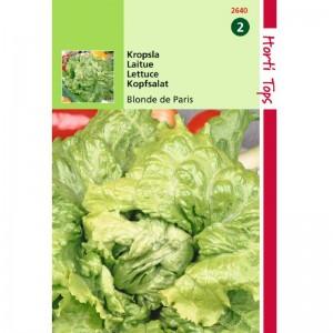 Graines de salade laitue Batavia Blonde de paris, graines potagères, achat, vente, pas cher