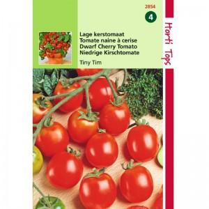 Graines de tomates cerises, Tiny tim, graines potagères, achat, vente, pas cher