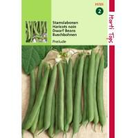Graines de haricots nains préludes, graines potagères, achat, vente, pas cher, hortitops