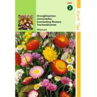 Graines, mélange de fleurs pour bouquets secs, achat, vente, pas cher