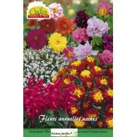 Mélange de fleurs à semer, annuelles, naines, multi-couleurs, achat/vente, cedor