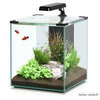 Aquarium, Nano Cubic 40, inclus éclairage et filtre, Aquatlantis, achat, pas cher