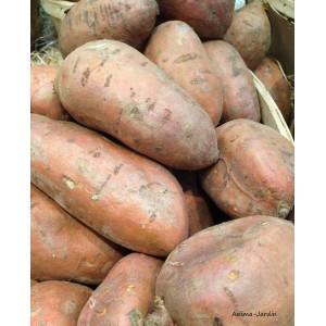 Patate Douce Beauregard, plants potagers, pot de 0.5L, potager, légume, achat, pas cher