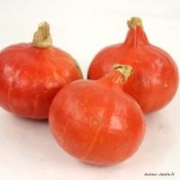 Potimarron AB, plants potagers bio, pot de 0.5L, légume, achat, pas cher