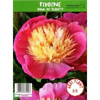 Pivoine herbacée, vivace, Bowl of Beauty, 2-3 branches, en pot coco, achat/vente