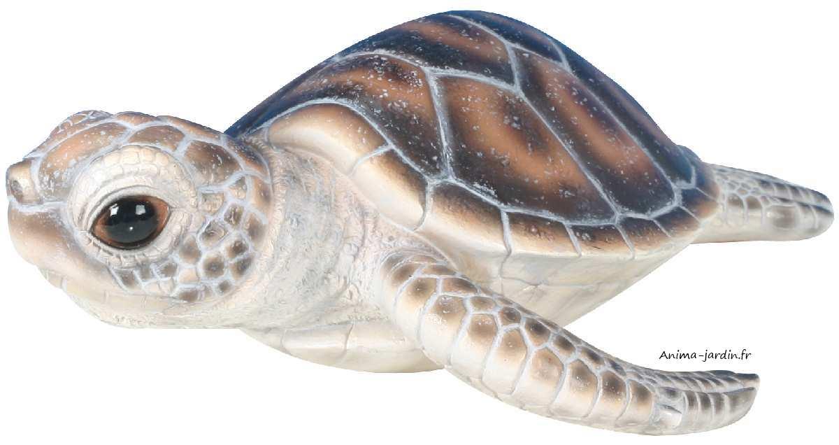 Bébé-tortue-marine-anima-jardin