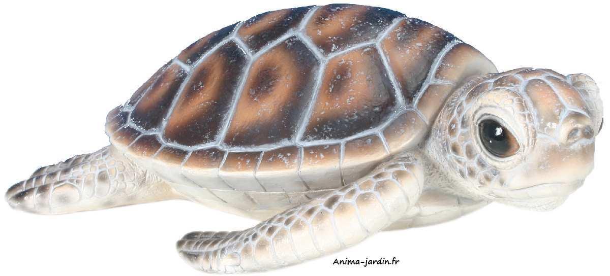 Bébé-tortue-marine-anima-jardin-2