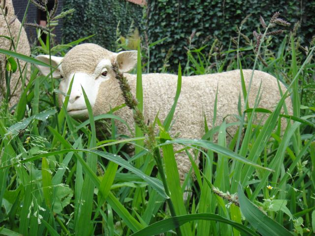 agneau-mouton-brebis-animal-resine-deco-jardin-anima-jardin.fr