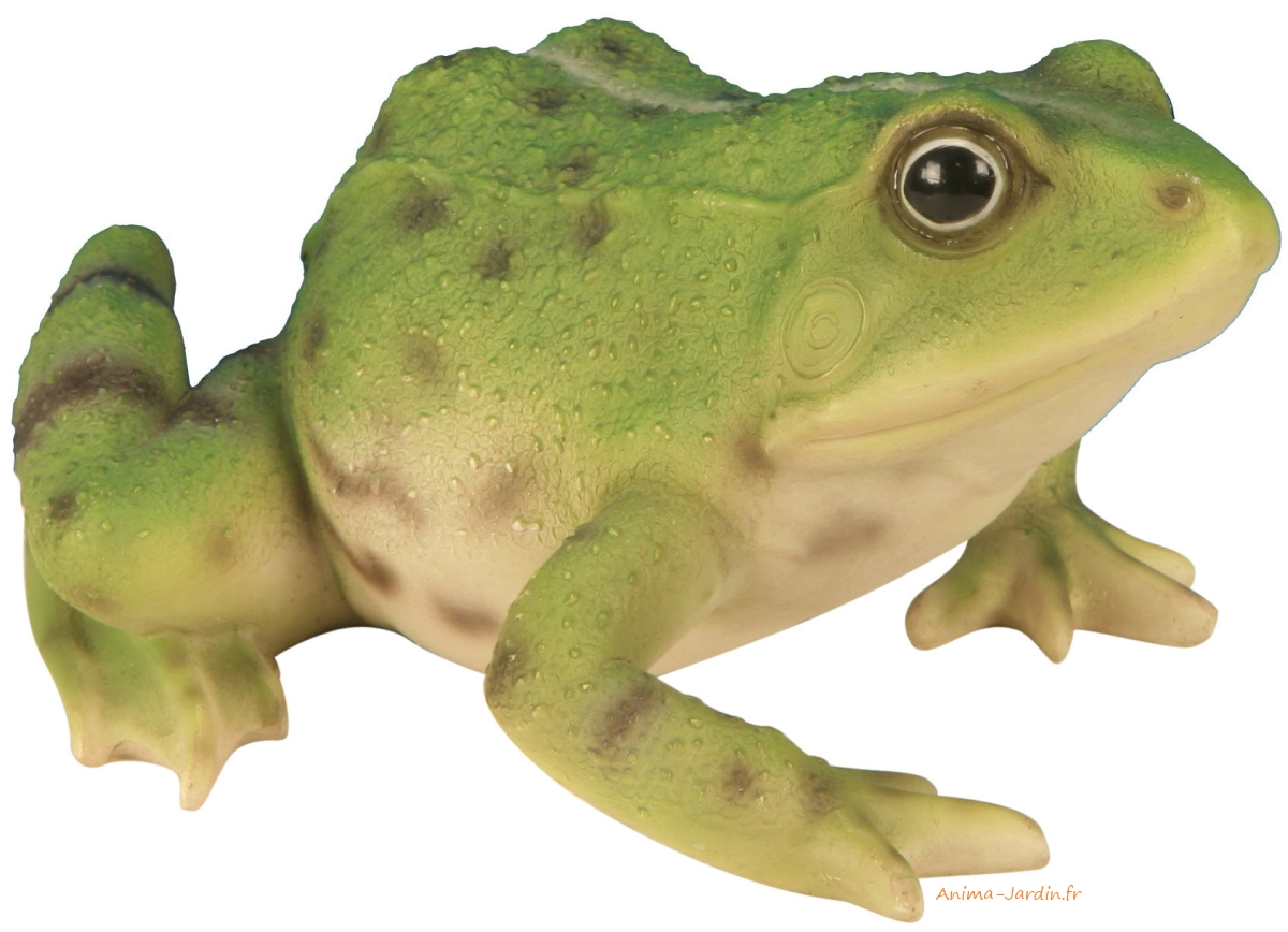 grenouille-verte-résine-deco-jardin-anima-jardin.fr