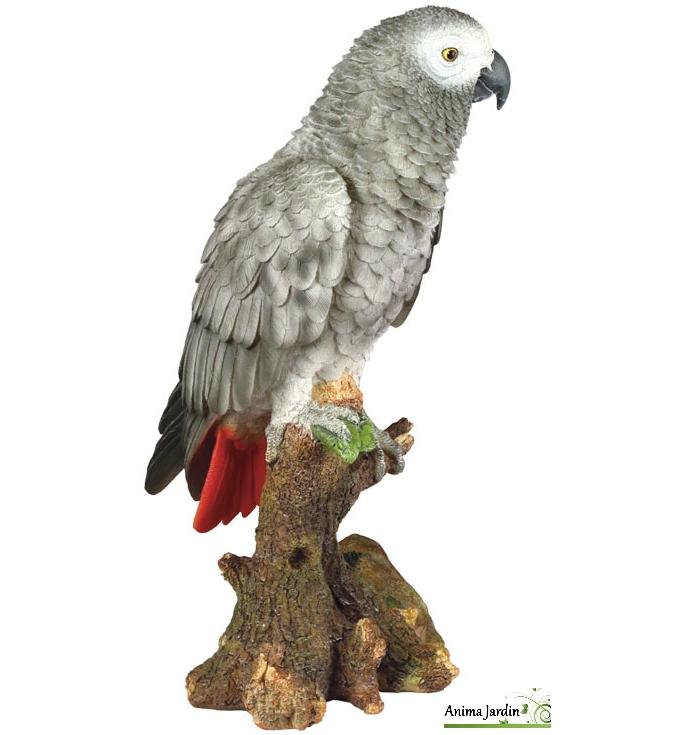 Perroquet-gris-du-gabon-anima-jardin.fr