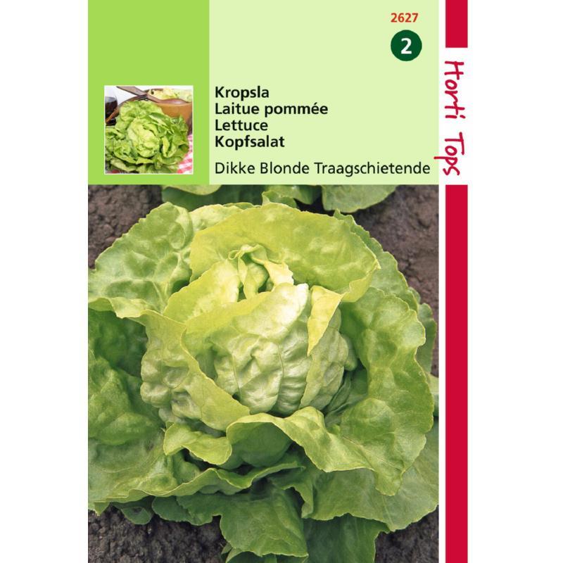 Graine de salade-laitue pommée grosse blonde paresseuse-Hortitops-Anima-Jardin.fr