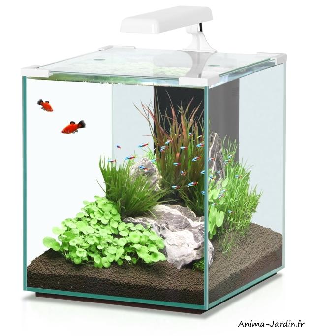 Aquarium-Nano Cubic 40-inclus éclairage et filtre-Aqualtantis-achat-pas cher-Anima-Jardin.fr