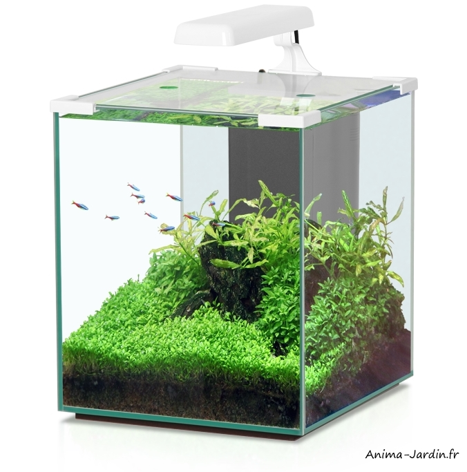 Aquarium-Nano Cubic 30-inclus éclairage et filtre-Aquatlantis-achat-pas cher-Anima-Jardin.fr