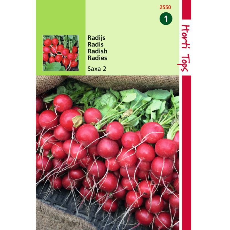 graine de radis saxa-rond-graines potagères-Hortitops-Anima-Jardin.fr