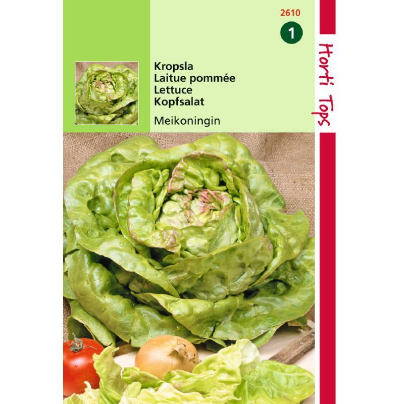 Graine de salade-laitue Reine de Mai-laitue traditionnelle de printemps-Hortitops-Anima-Jardin.fr