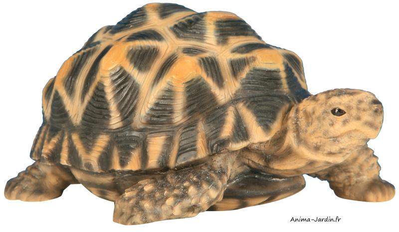 tortue-étoilée-résine